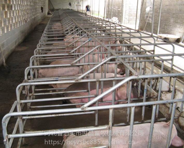 世昌畜牧养猪设备定位栏 连体栏