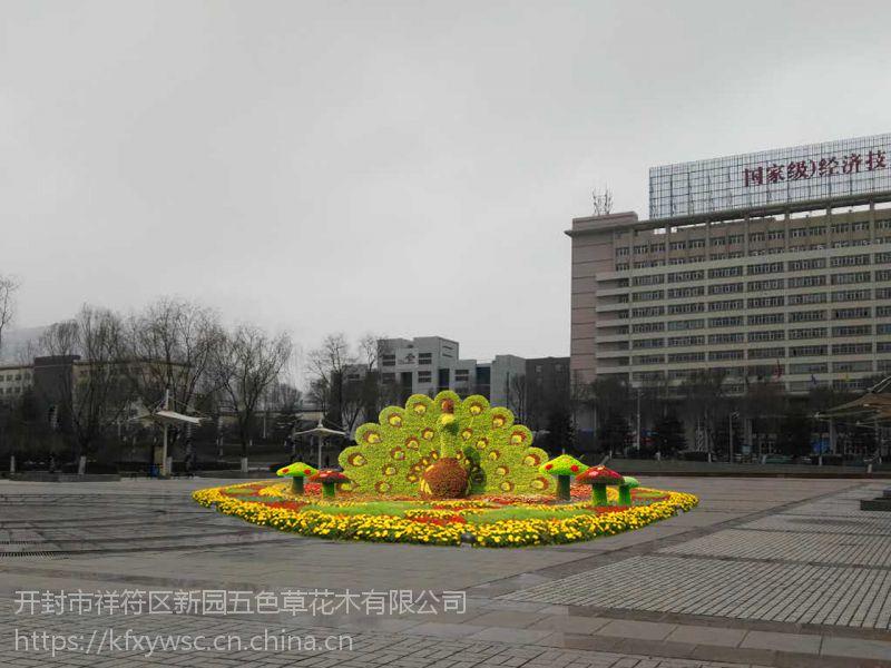 新园五色草观叶立体造型-孔雀