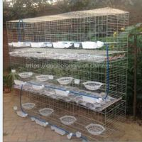 批发大型养殖场3层12位肉鸽子笼子具安平兴博鸽子养殖笼
