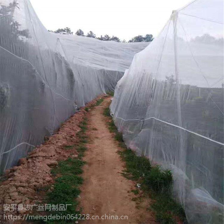 白色60目蔬菜防虫网 批发新疆葡萄专用加厚防虫网