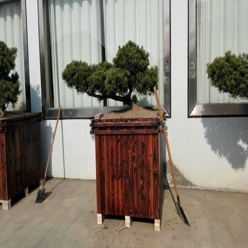 韩城市实木花箱厂家现货,高档花箱欢迎订购,厂家现货