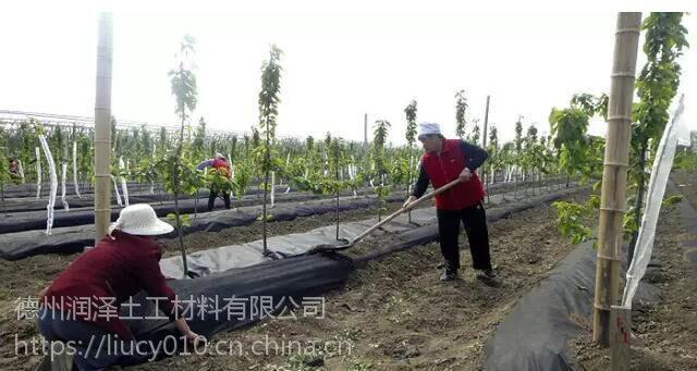 厂家直销黑色编织全新料防草布大棚种植除草地布果园防草布抗老化抗晒