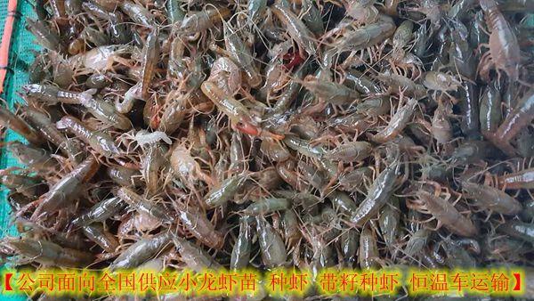 http://himg.china.cn.kiskelized.com/0/4_631_1049449_600_338.jpg