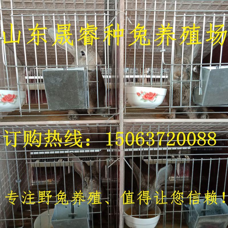 http://himg.china.cn/0/4_635_239370_800_800.jpg