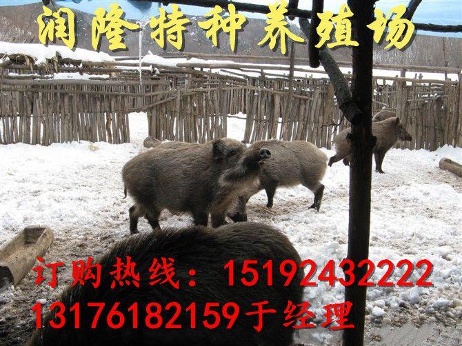 http://himg.china.cn/0/4_638_239740_670_502.jpg