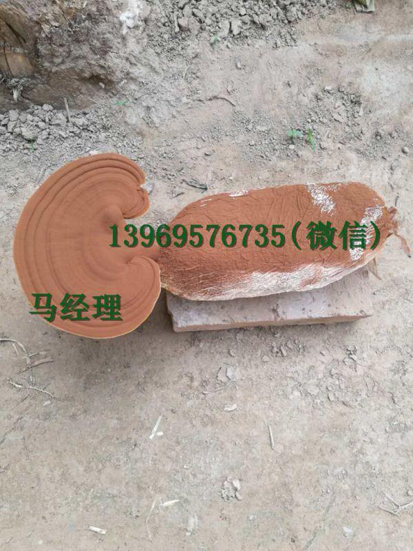 http://himg.china.cn/0/4_639_227354_600_800.jpg
