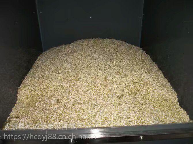 义县全自动豆芽机设备