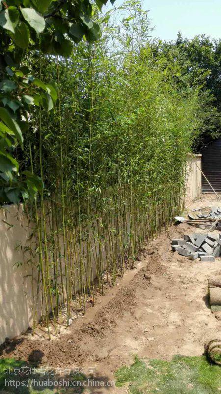 移栽竹子季节,春天栽种竹子成活率高,效果好