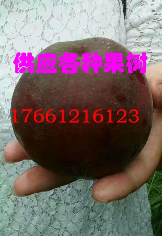 http://himg.china.cn/0/4_658_239130_548_800.jpg
