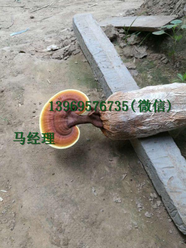 http://himg.china.cn/0/4_659_229424_600_800.jpg