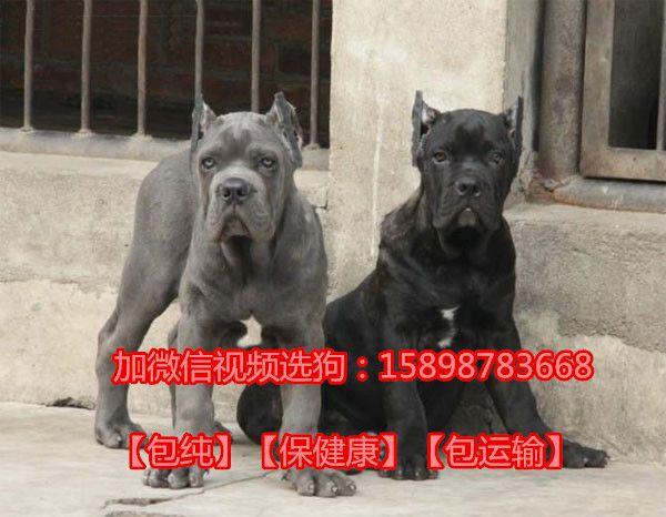 http://himg.china.cn/0/4_662_244838_600_466.jpg