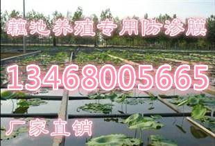 http://himg.china.cn/0/4_673_239498_310_211.jpg