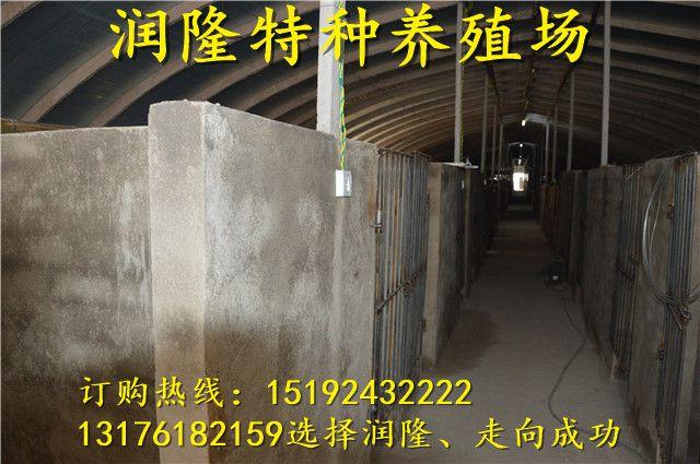http://himg.china.cn/0/4_674_234222_640_425.jpg
