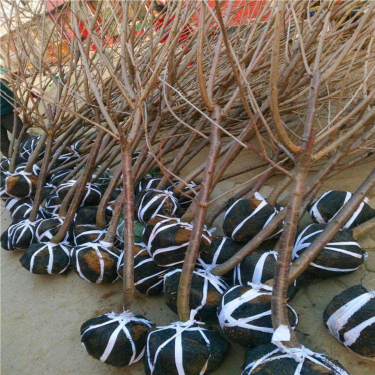 http://himg.china.cn/0/4_676_237936_750_750.jpg