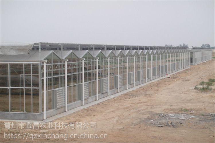 河南信阳休闲旅游养生玻璃大棚温室阳光房3万平方、可抗10级风建造报价