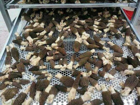 湖北逸村红枣加工干燥设备 zxc-60型红枣专用烘干机 大枣烘干除湿机