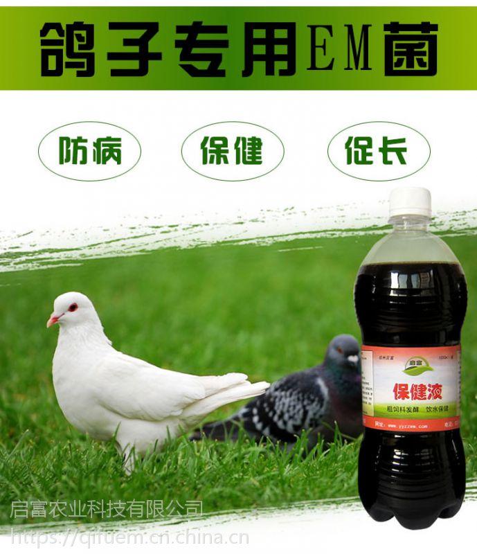 鸽子粪便稀水怎么办