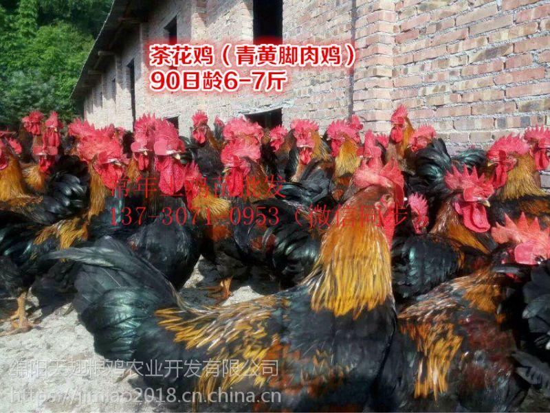 永济土鸡苗,鸡苗统货,空运发货,鸡,统货,空运发货