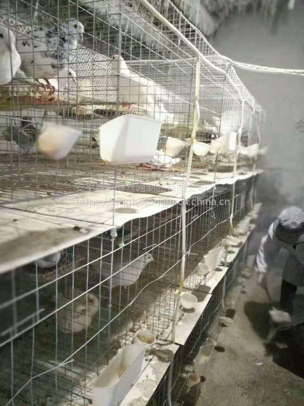 适用大型养鸽厂层联式3层12位镀锌铁丝鸽子笼