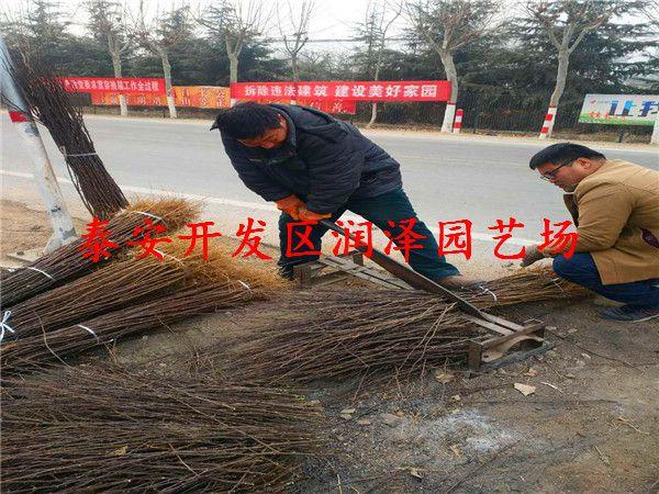 http://himg.china.cn/0/4_693_1058755_600_450.jpg