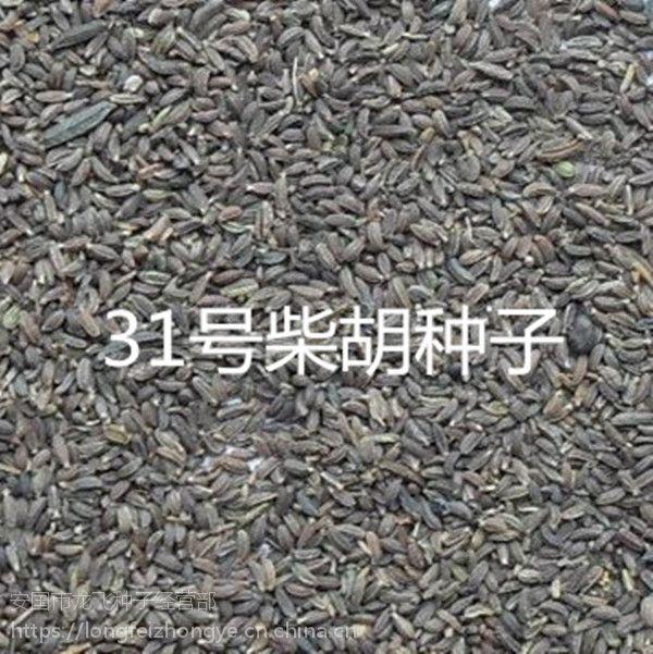2017年纯新中药材31号黄柴胡种子价格优惠批发零售回收产品