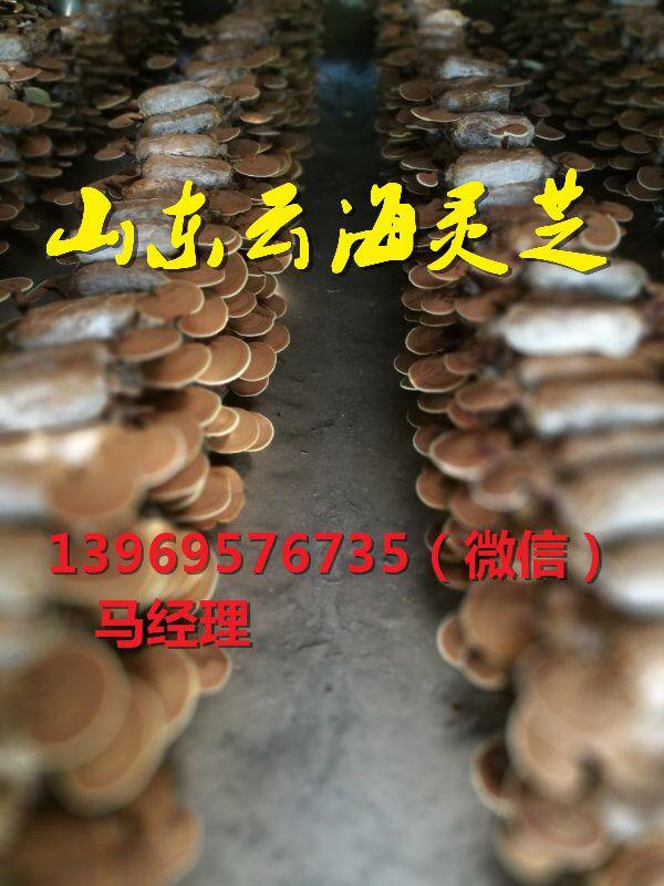 http://himg.china.cn/0/4_6_226952_600_800.jpg