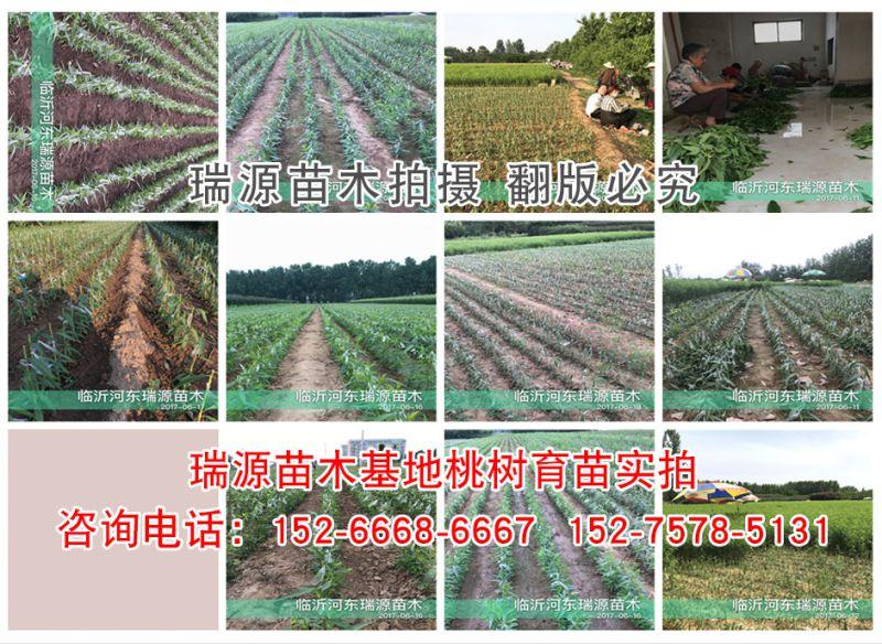 http://himg.china.cn/0/4_703_237756_800_584.jpg