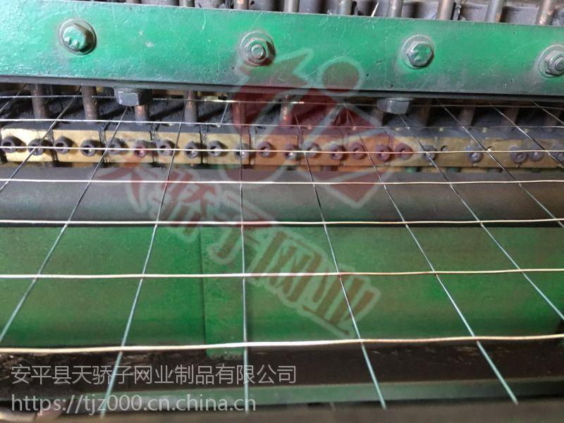 安平县天骄子销售电焊网网床养殖995