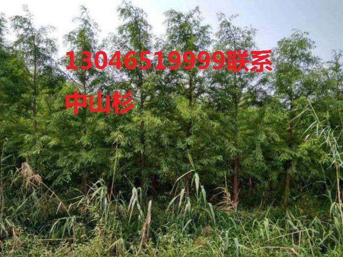 http://himg.china.cn/0/4_709_236930_700_524.jpg