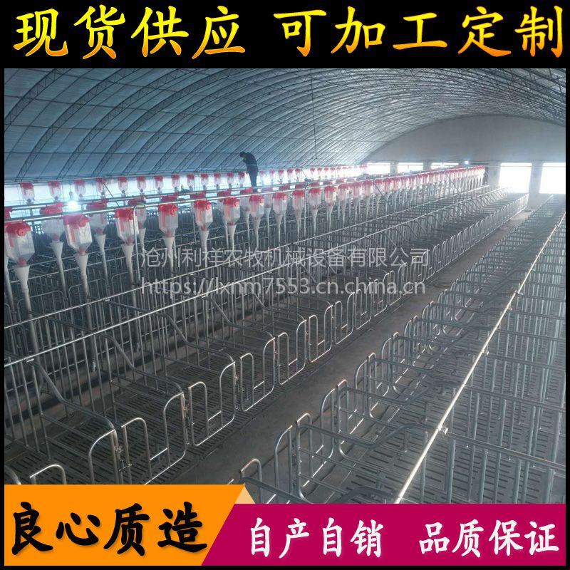 新品液态饲喂系统 全自动化养猪料线 自动料线 猪用