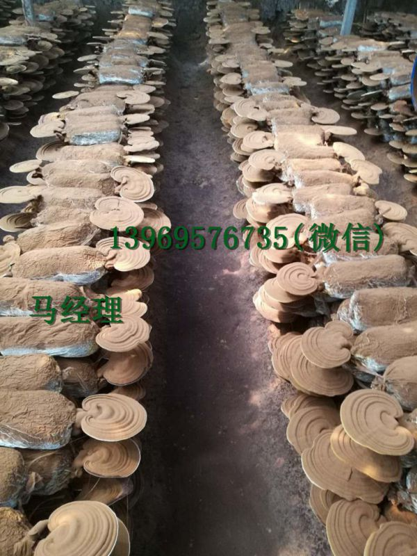 http://himg.china.cn/0/4_70_227104_600_800.jpg