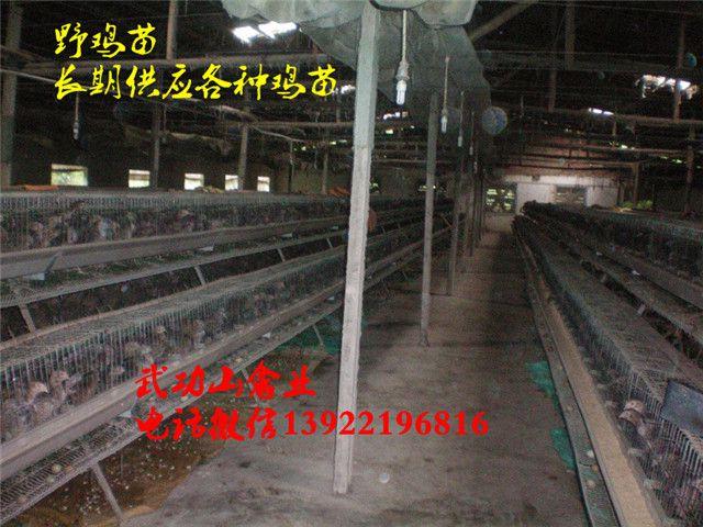 http://himg.china.cn/0/4_714_236348_640_480.jpg