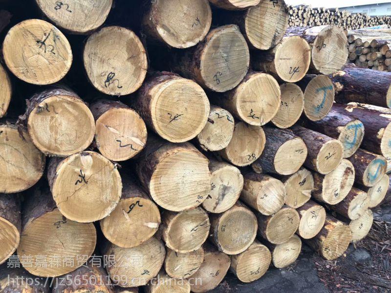 进口俄罗斯落叶松原木/大直径落叶松原木/小直径打桩小杆