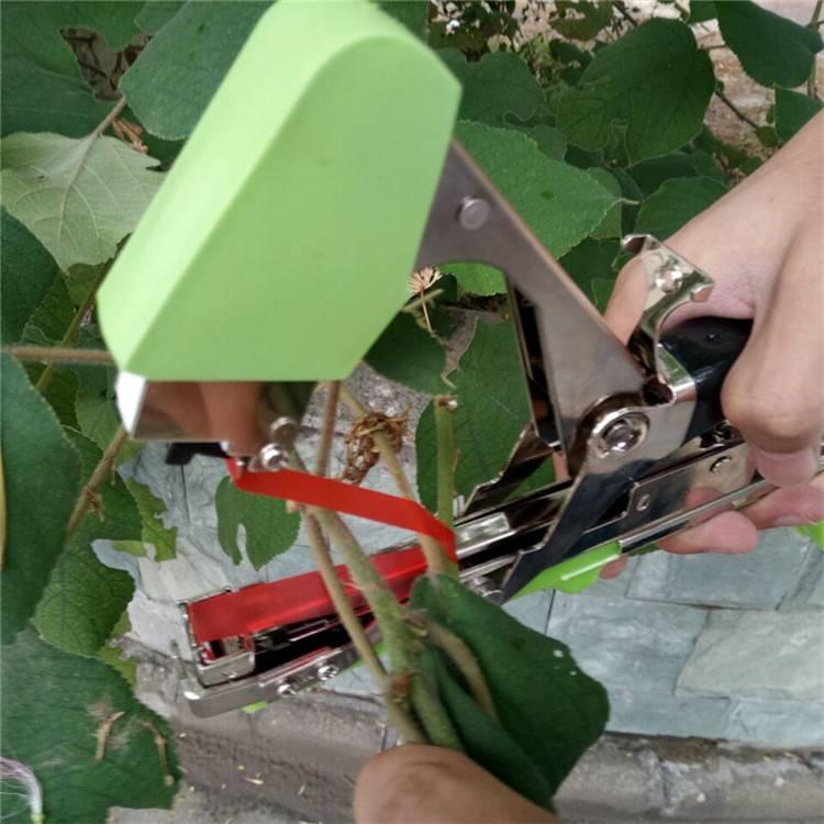 葡萄园绑扎优质绑枝机 圣女果好操作绑藤机