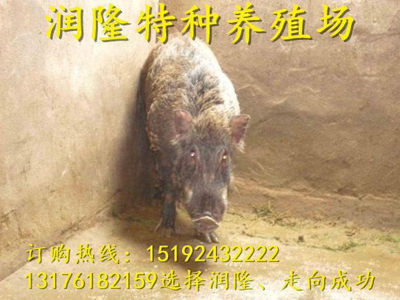 http://himg.china.cn/0/4_725_235812_580_435.jpg