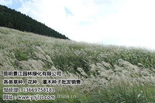 景江园林绿化(图),昆明绿化草种哪家好,昆明绿化草种