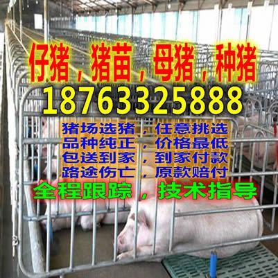 http://himg.china.cn/0/4_726_238992_401_401.jpg