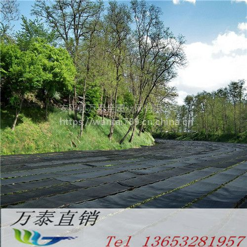 2针现货盖土网 绿色安全防尘网 优质的扁丝绿网