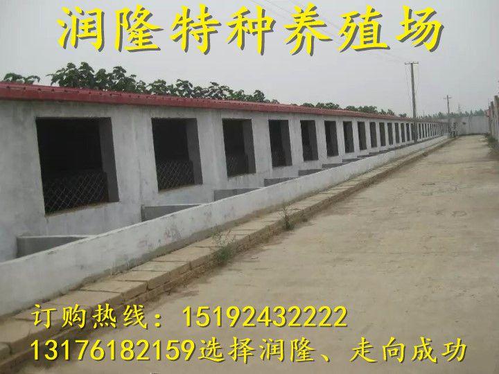http://himg.china.cn/0/4_740_234998_720_540.jpg