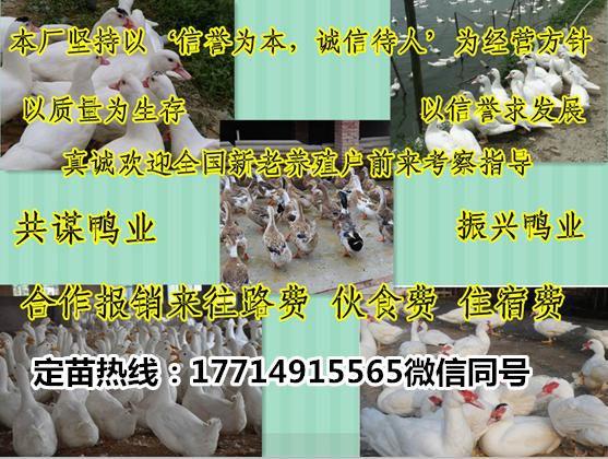http://himg.china.cn/0/4_745_236982_557_420.jpg