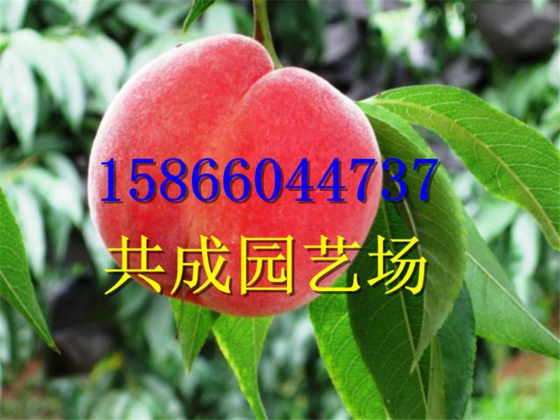 http://himg.china.cn/0/4_745_241982_800_600.jpg
