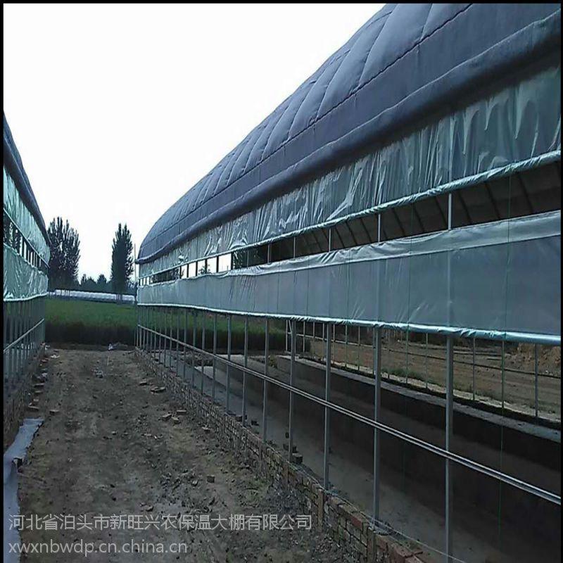 新旺兴农养殖大棚8311热镀锌钢架大棚