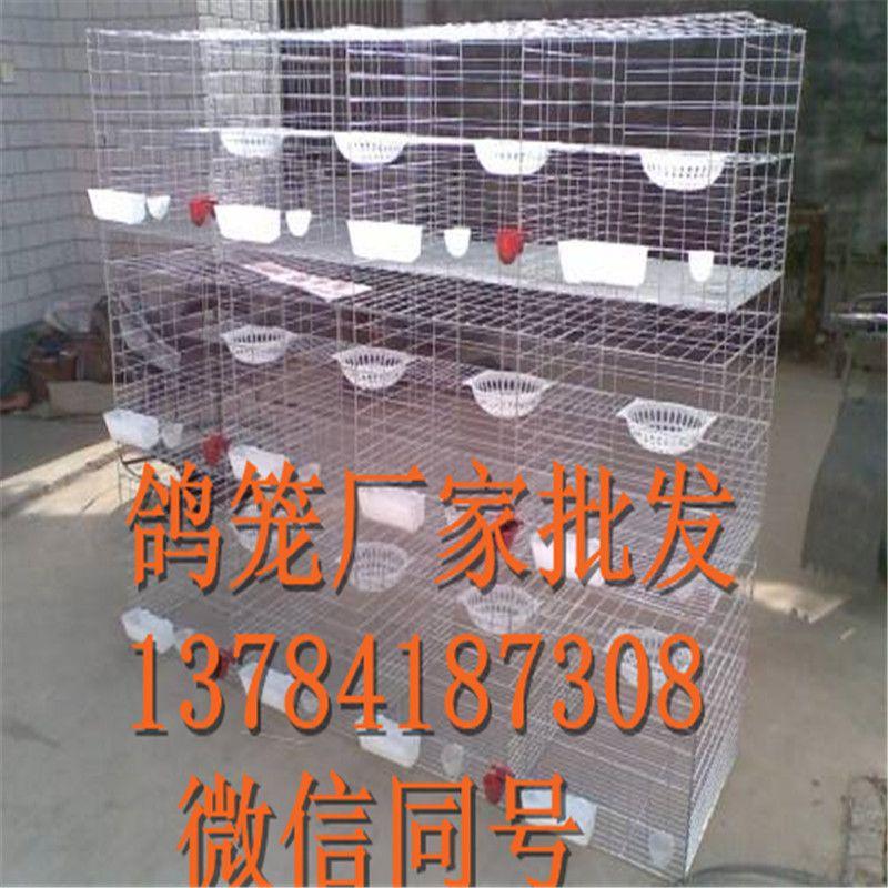 鸽子笼厂家批发【三层鸽子养殖笼】四层鸽笼
