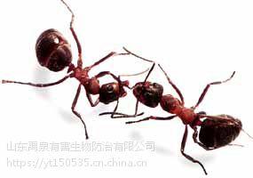 禹泉虫控烟台灭臭虫灭跳蚤灭蚂蚁专业杀虫公司