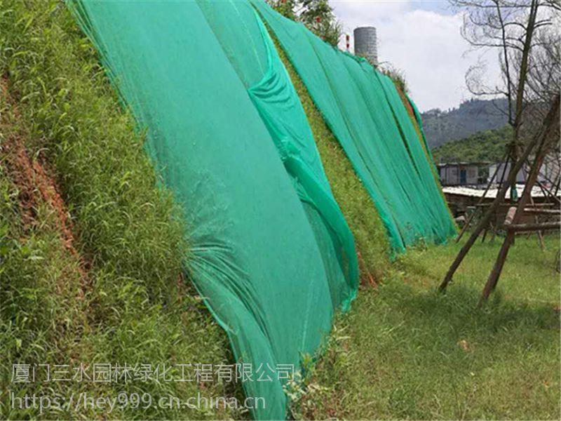 云南昆明市高速护坡现在这个天气播高羊茅可以吗
