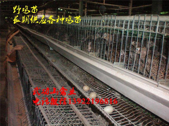 http://himg.china.cn/0/4_759_235914_640_480.jpg