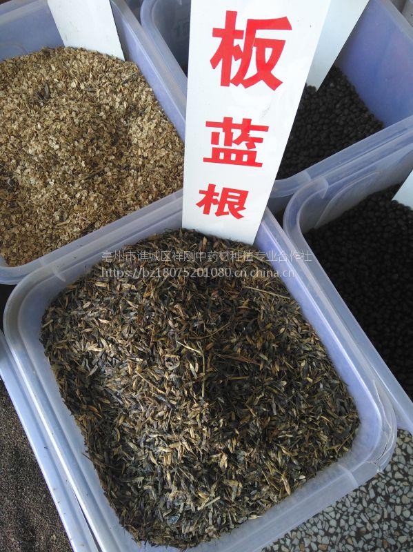 蛇床子种子一亩地3公斤@@亩产效益200公斤干品
