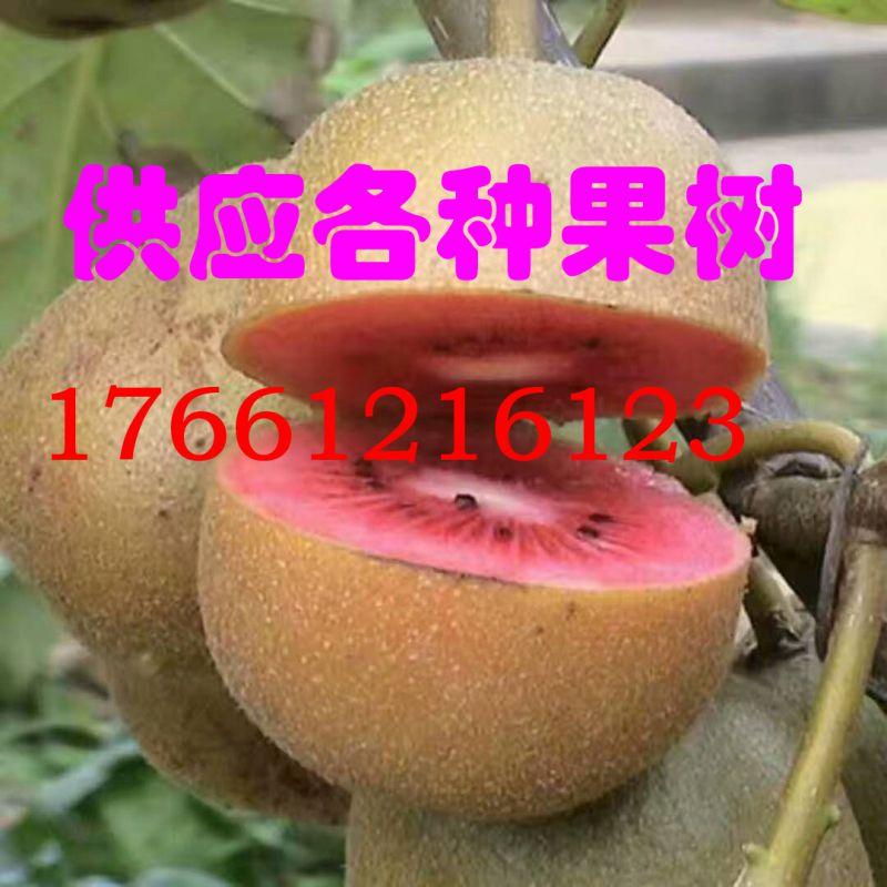http://himg.china.cn/0/4_774_239840_800_800.jpg