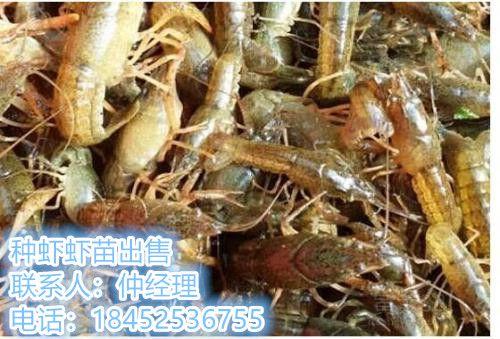 http://himg.china.cn/0/4_77_239850_500_339.jpg