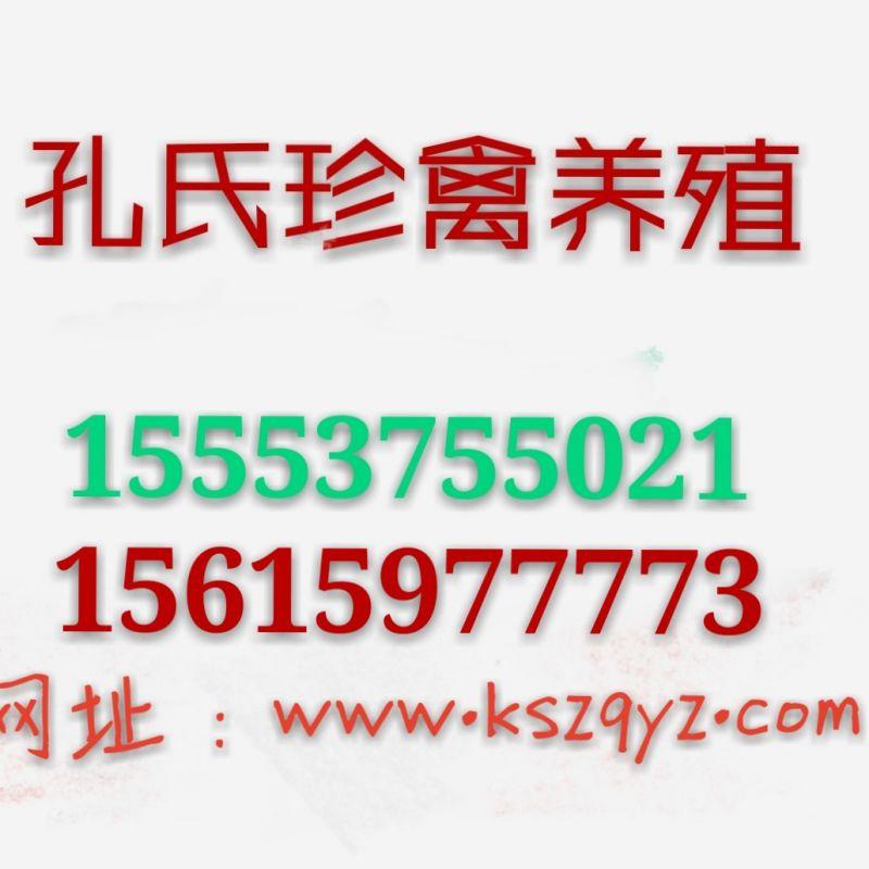 http://himg.china.cn/0/4_780_238612_800_800.jpg